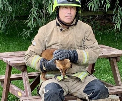 Firefighters rescue fox with leg stuck in picnic table