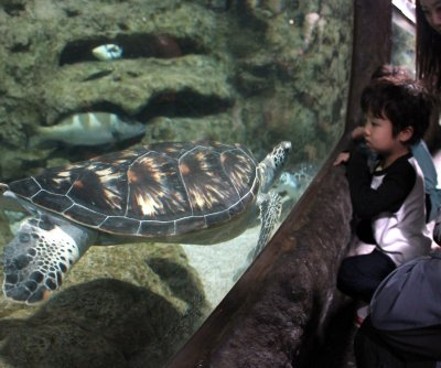 World Turtle Day: What to know and how to help