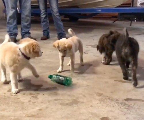 Stray dog and puppies crash Michigan man's bachelor party