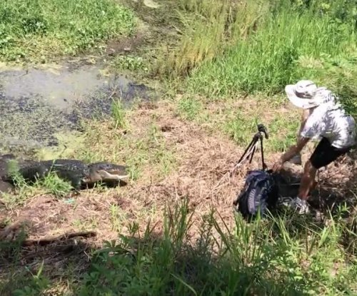 Alligator snaps at man attempting to take its picture