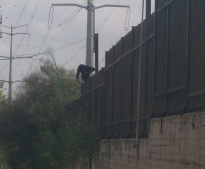Police in Israel capture escaped spider monkey