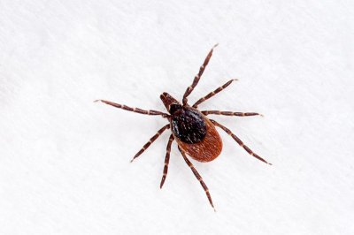 Ticks carrying Lyme disease confirmed in eastern national parks