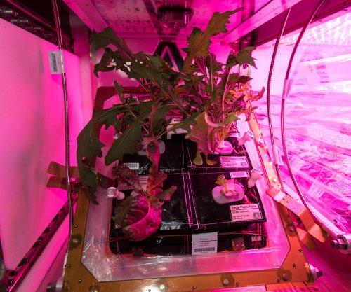 Study confirms space-grown lettuce nutritious, safe