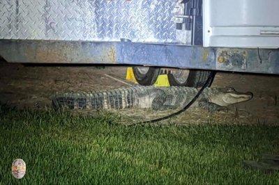Police, wildlife officers wrangle loose alligator in Idaho