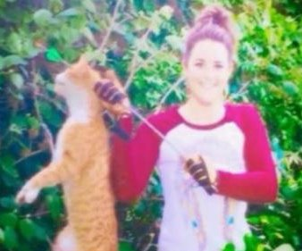 Veterinarian fired after posting photo of cat shot with arrow