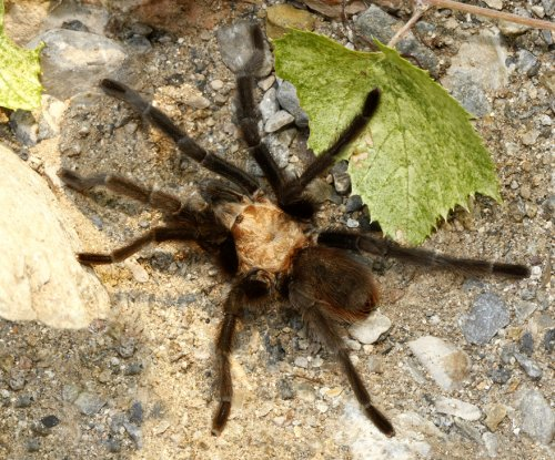 Police probing domestic violence report find man battling spider