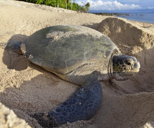 Study: Less beach debris equals more sea turtle nests