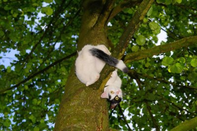 Kansas firefighters rescue cat, owner from tree