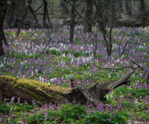 Plant diversity in Europe's forests is on the decline