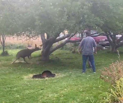 Wildlife officials free mule deer from backyard hammock in Idaho