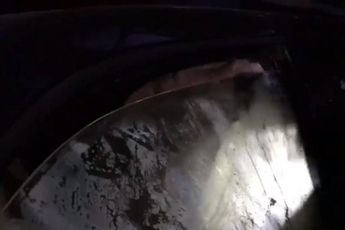 California deputies free bear trapped in car