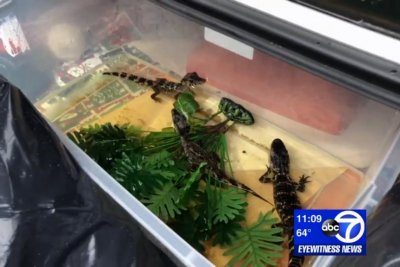 Gila monsters, alligator seized from car in New York state