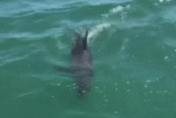 Volunteers rescue dolphin stranded in shallow Texas waters