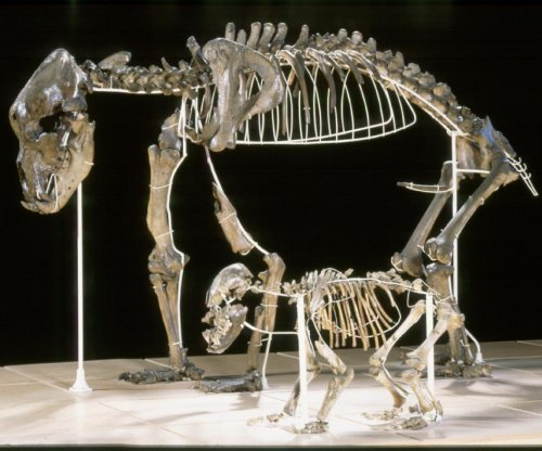 Cave bear paid the ultimate price for being a picky eater