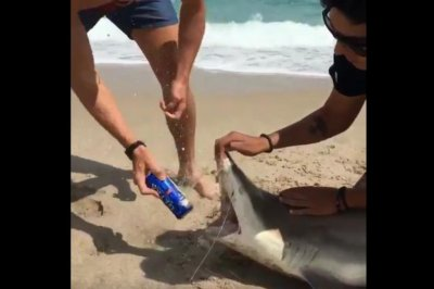 Video shows spring breakers opening beer in shark's mouth