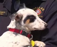 Dog rescued from SUV engine, adopted by firefighter