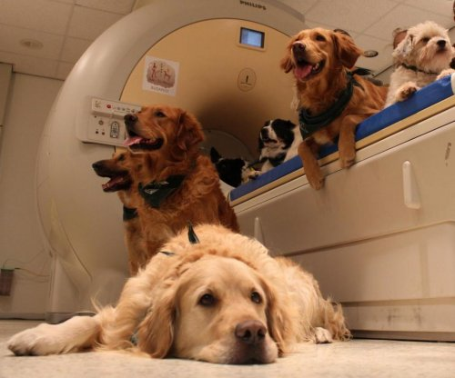 Brain scans show dogs know what humans are saying: Study