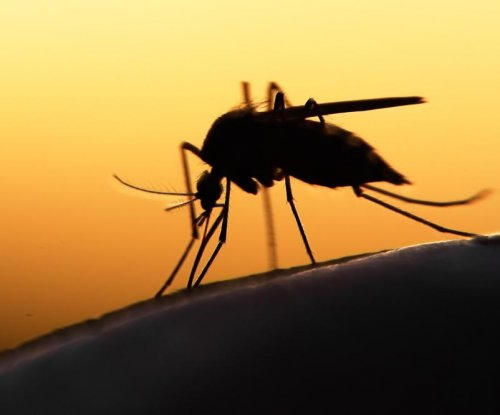 Fungus makes mosquitoes more likely to catch, spread malaria