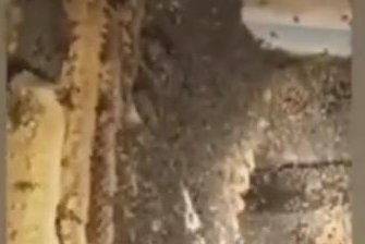 70-pound beehive found under California man's garden shed
