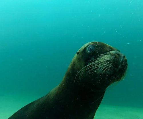 Sea lion takes GoPro on underwater tour in Mexico
