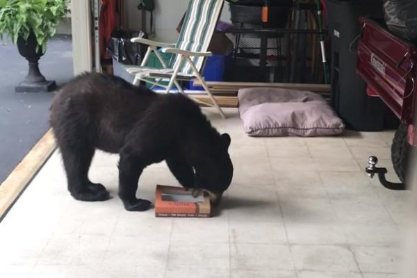watch  doughnuts left in garage attract black bear