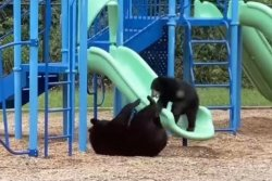 Mother bear, cub play on North Carolina school's playground