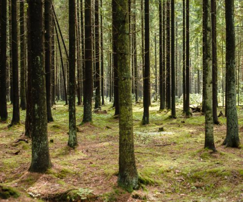 Study: Trees with thicker bark are more resistant to fire