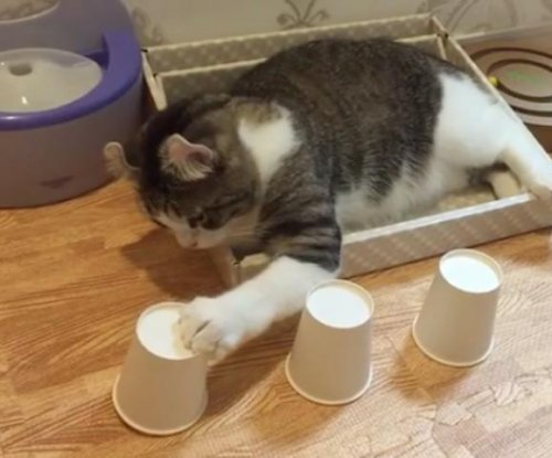 Talented cat excels at cup and ball trick