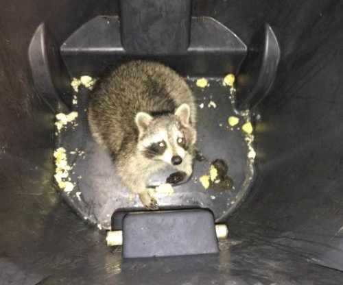 Wayward raccoon stops Canadian subway train in its tracks