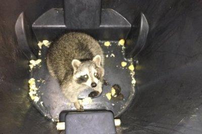 Wayward raccoon stops Canadian subway train in its tracks