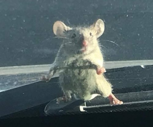 Mouse hitches ride on California deputy's windshield