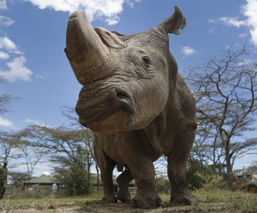 Sudan, last male northern white rhino, dies in Kenya
