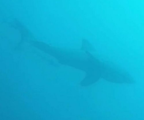 Florida scuba divers have close call with great white shark