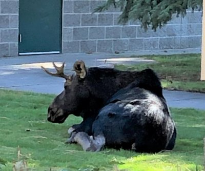 Moose visits Idaho middle school while classes are in session