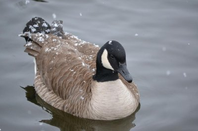 Firefighters attempting goose rescue in Michigan find hunting decoy