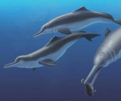 Researchers discover ancient species of river dolphin
