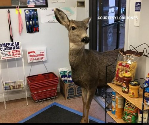 Mama deer wanders into gas station, comes back with the family