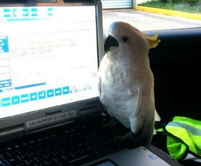 Police reunite Virginia magician with lost cockatoo
