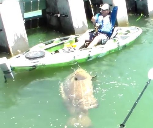 Screaming Florida kayaker lands 552-pound goliath grouper