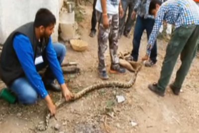 Rescuers: Python acted as 'mother' to puppies trapped in well