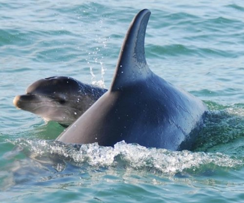 Reproductive success best predictor for bear, dolphin population forecasting