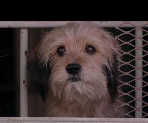 'Benji' returns in first trailer for upcoming Netflix revival