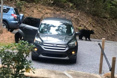 Watch: Bears open doors of unlocked SUV, steal pack of gum