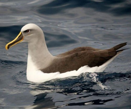 Seabirds eat debris that looks like natural prey