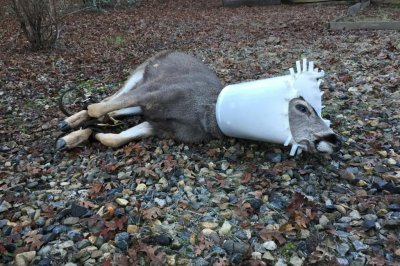 Deer rescued from plastic chicken feeder stuck around neck