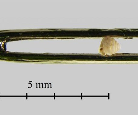 Tiniest-ever snail species found in China