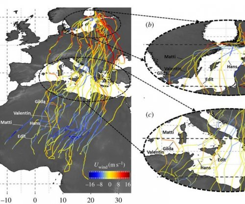 Young birds migrating to Africa dispersed by winds, study shows