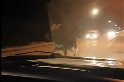 Moose's run down middle of Canadian road caught on camera