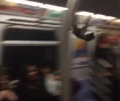 Fare-dodging pigeon prompts panic on New York subway train