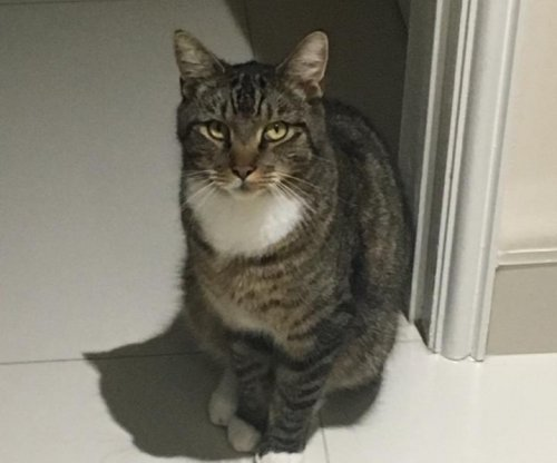 Lost cat returns home four months later thanks to microchip